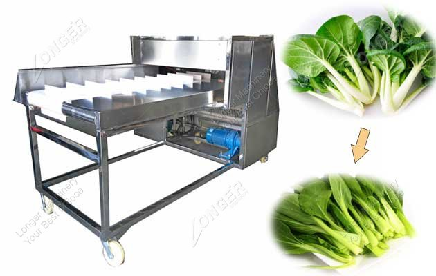 Commercial Needle Mushroom Root Cutter Machine