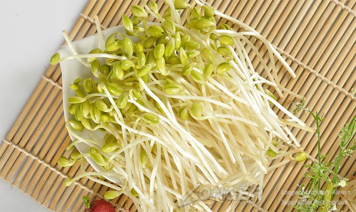 bean sprouts making machine with best price china