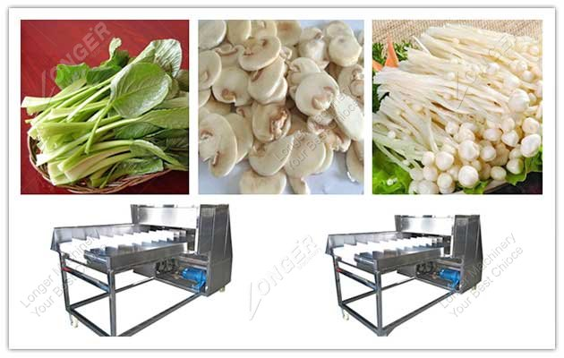 celery root cutting machine